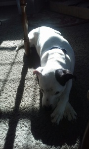 Here is Tex!  He found the spot of sunshine that was closest to me.  Isn't he precious?